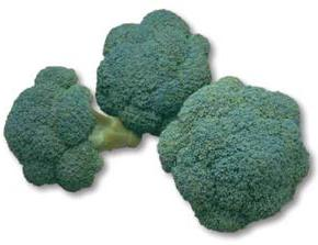 broccoli mintop