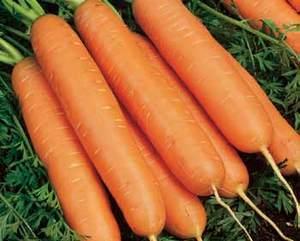 morcov yucon